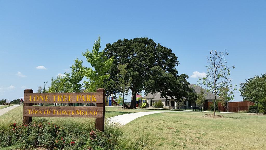 Post oak in Flower Mound