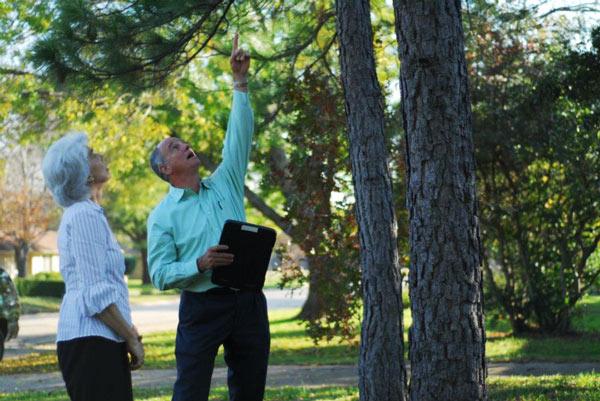 Master Arborist Consultations