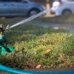 How to Water Your Trees During the Summer
