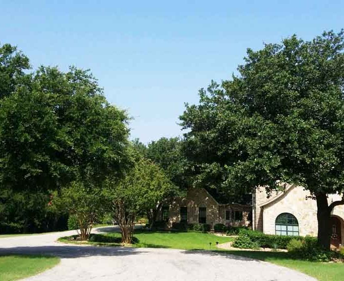 The Five Best Shade Trees for North Texas