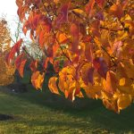 Tree Care Tips from Tiana George, Part 3: Nurturing Your Tree