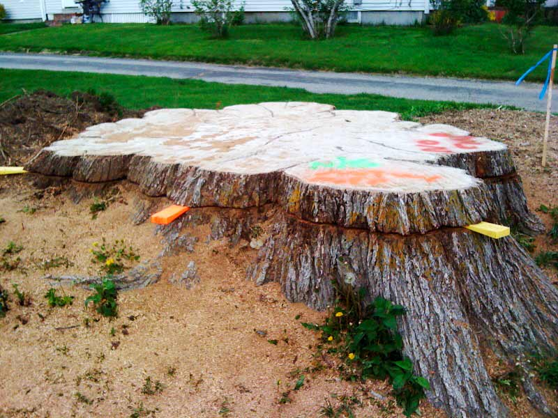 Stump Removal Costs and Considerations