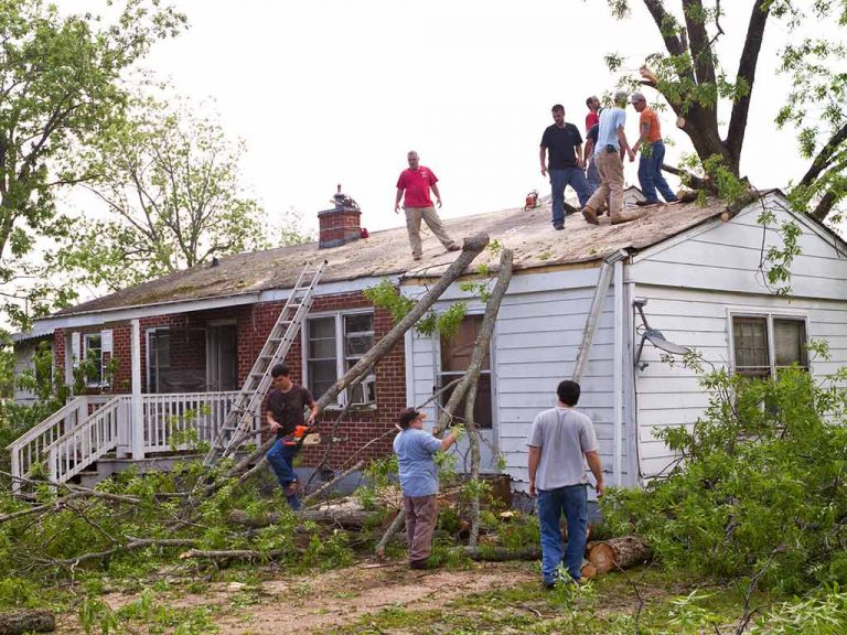 Can you cut down your neighbor's tree or branches?