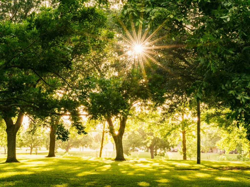 What is Plant Health Care for Trees?