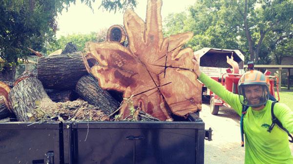 Tree Removal Service in Denton, Texas